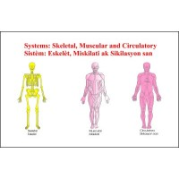 Chart: Skeletal, Muscular, Circulatory
