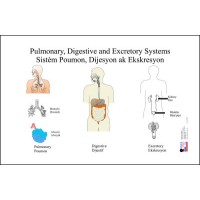 Chart: Pulmonary, Digestion & Excretion System