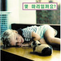 How Many? board book in Korean only