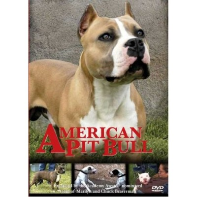 american pit bull american dvd